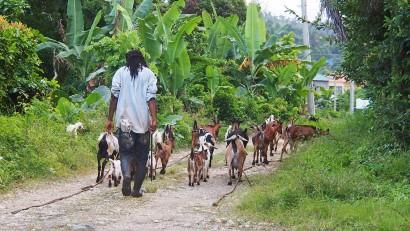 jamaika.jpg